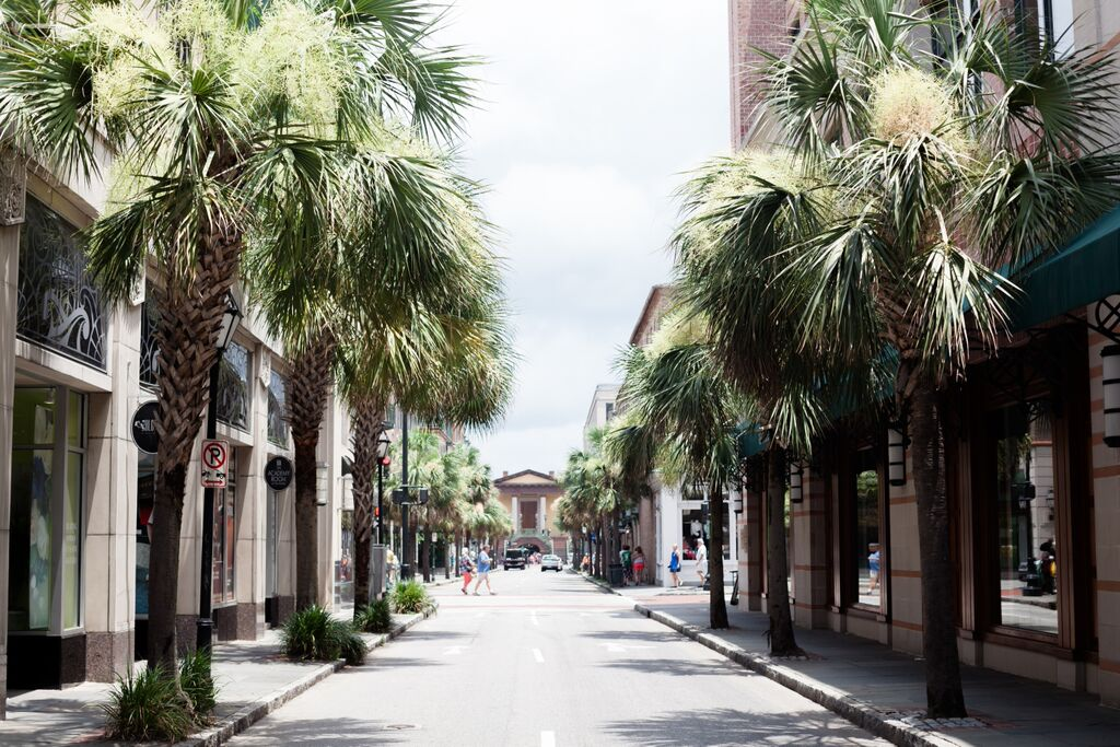 Charleston Palm Tree Lined Streets