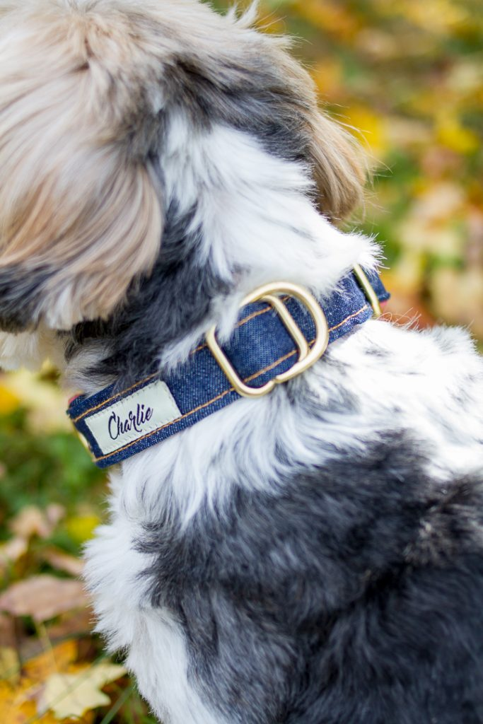 Dog Collars That Give Back